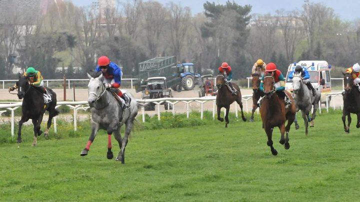 """Internazionali 2012, vince il """"continentale"""" Bochalet da Clodia nei fondo inglese, mentre tra i fondo arabo trionfa Quarzo Blu."""