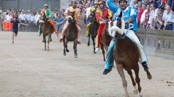 Palio di Siena: conosciamo i 10 cavalli, tutti nati e allevati in Sardegna