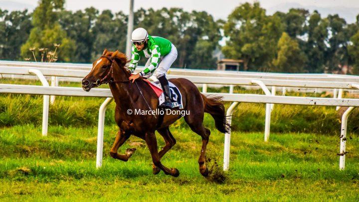Seconda vittoria in carriera di Zamura, una storia di cavalli e uomini……