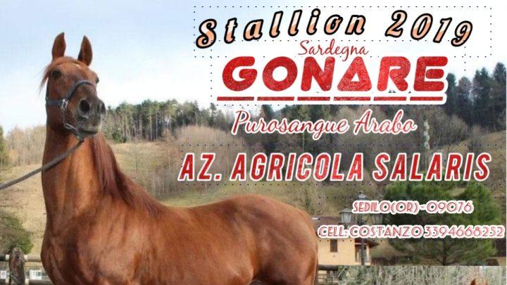 Stallion 2019: ecco Gonare P.S.A