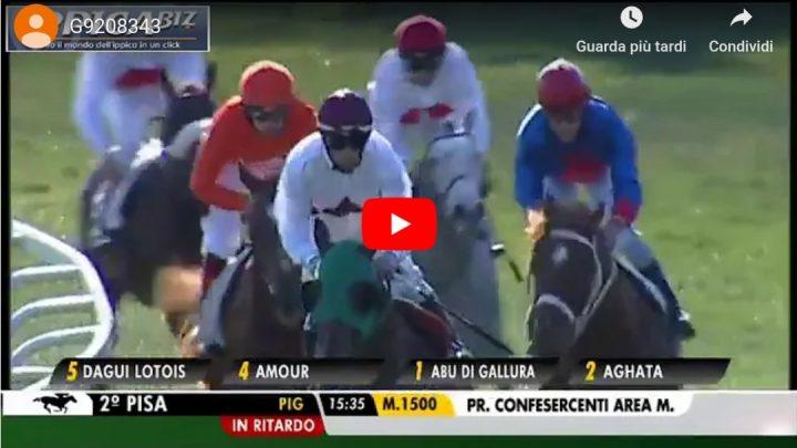 """Pisa: tra i Psa strepitosa vittoria del """"Sardo"""" Amour, Manou vince il Wathba….."""