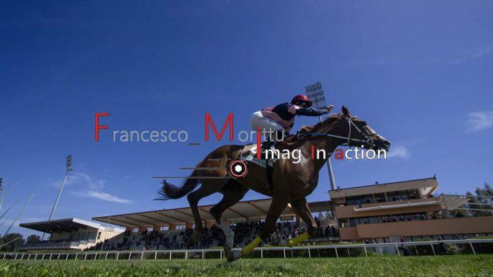Buonvicino e Pincode, ritorno al successo per due cavalli dal sangue blu……