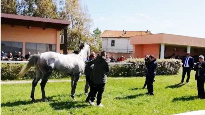 Chilivani: risultati e commenti tecnico della 5° giornata di corse.
