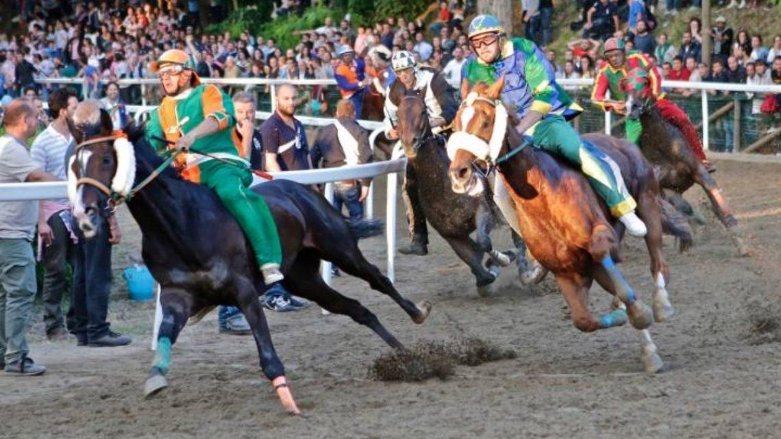Fucecchio: conosciamo meglio i 10 cavalli del Palio.
