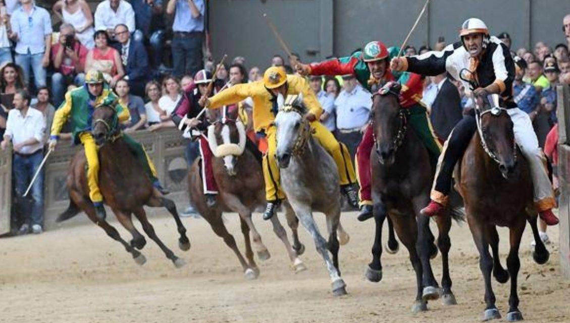 Palio di Siena: i 10 cavalli, 6 gli Anglo Arabo Sardo, 3 debuttanti.