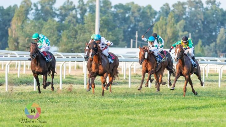 Chilivani: partenti speciale 93°Derby Sardo e Listed Race.
