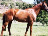 È morto Frac di Montalbo, lo stallone incompreso….