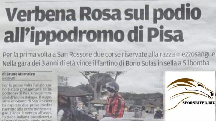 Gli Anglo Arabo a San Rossore, la notizia rimbomba anche in Sardegna.