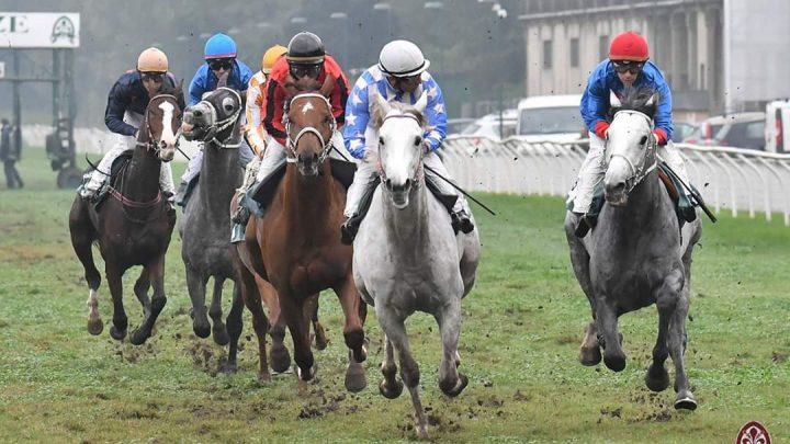 Pisa: 4 corse per gli Anglo Arabo a    Febbraio, distanze, premi, ecc.