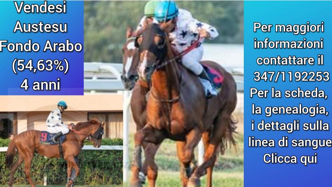 Cavallo in vendita Austesu, la scheda, genealogia, fratelli…..