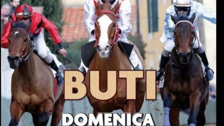 Palio di Buti: conosciamo meglio i 7 cavalli, due sono gli Anglo Arabo Sardo in gara.