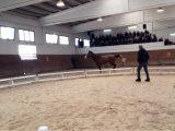 Aste Agris: i nomi dei cavalli acquistati