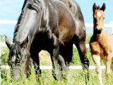 Covid-19 nuove norme sul trasporto animali.