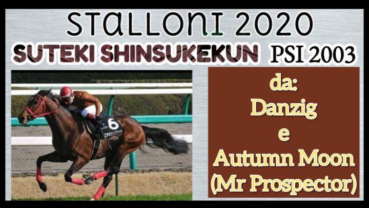 Stalloni 2020: Suteki, il PSI diretto di Danzig in Sardegna.
